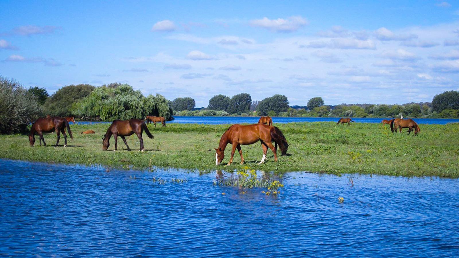 Cavalos nos Mouchões