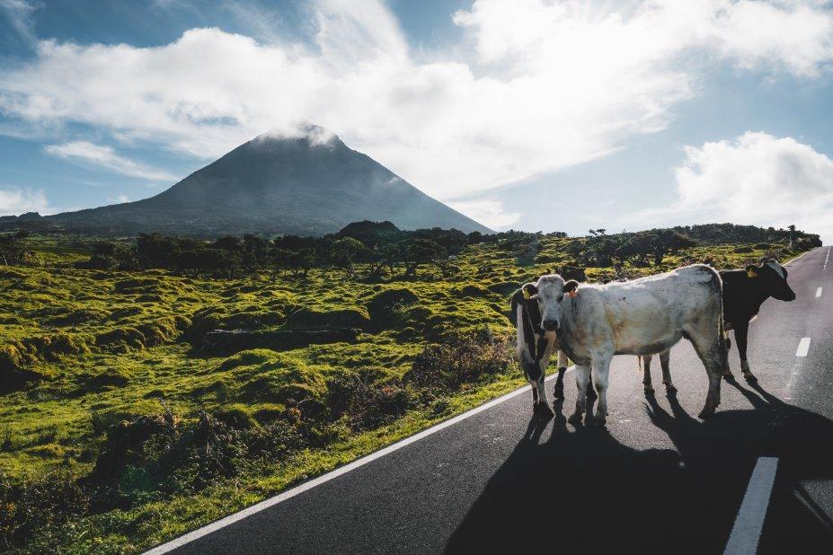 Paisagem Açores